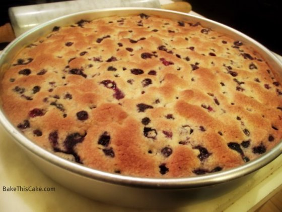 Round blueberry cake round in pan