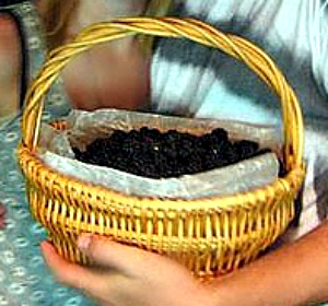 Basket of wild blackberries from the river house BakeThisCake