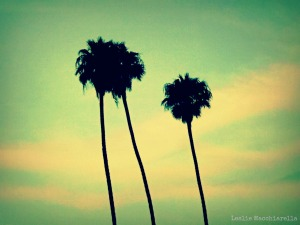 Palm Trees at the Beach photo by Leslie Macchiarella
