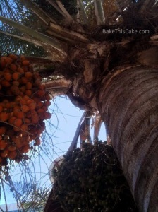 Date Palm at Pershing Square downtown Los Angeles BakeThisCakecom