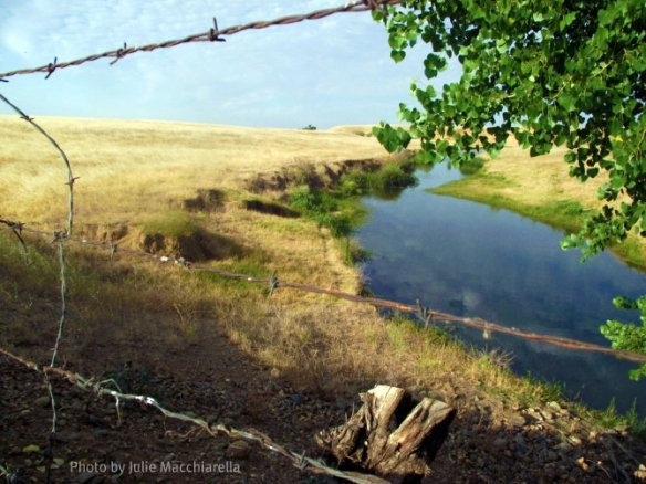 Dry Creek through barbed wire fence Photo by Julie Macchiarella