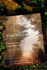 While Wandering book in leaves Photo by LifeForcePhotos