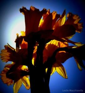 Silhouette of Easter Flowers photo by Leslie Macchiarella for BakeThisCake