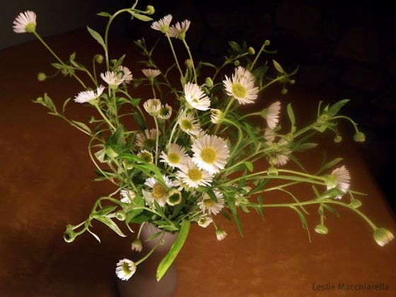 Spring Flowers Photo by Leslie Macchiarella for BakeThisCake