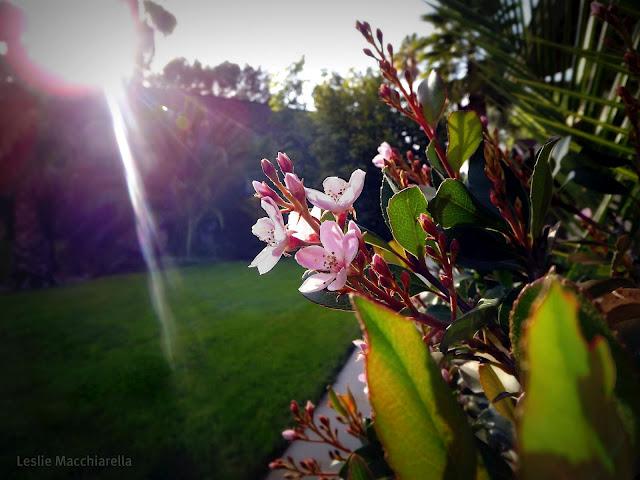 Spring New Growth photo by Leslie Macchiarella for BakeThisCake