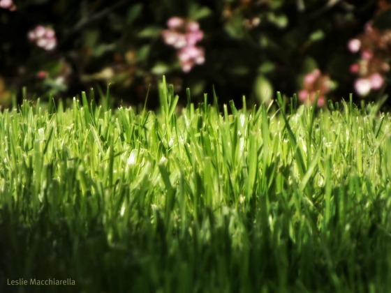 Grass photo by Leslie Macchiarella