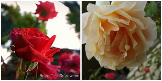 Winter Roses peach rose  bake thisc ake