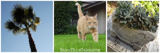 Palm Trees Sid the big orange cat and potted succulents by bake this cake