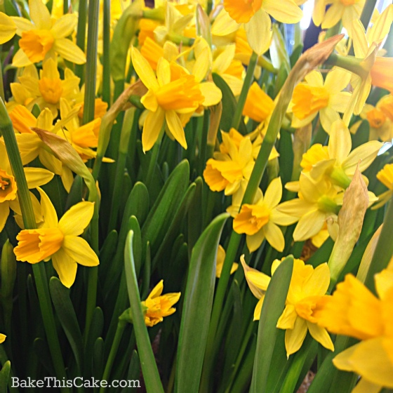 Garden of Yellow Spring Flowers Daffodils by Leslie Macchiarella Bake This Cake